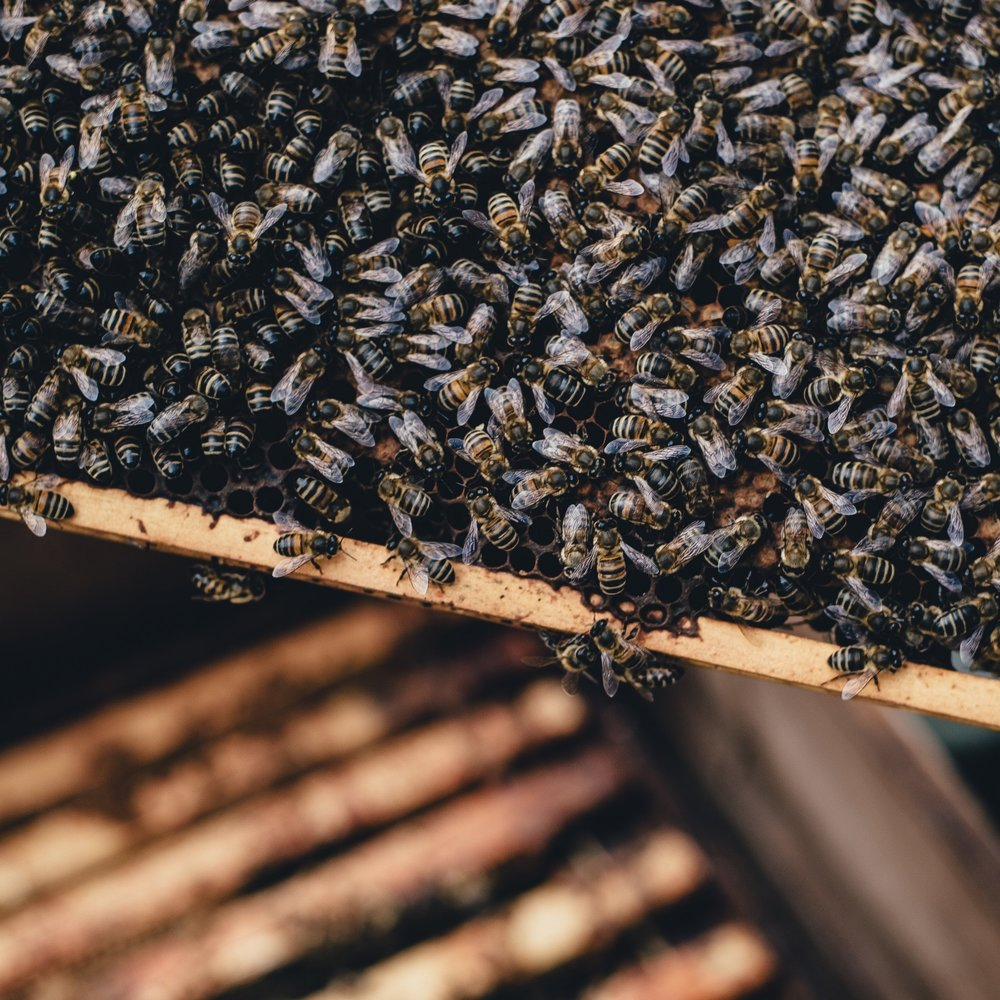 fungal ferment bees3.jpg