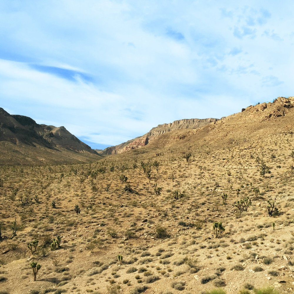 ecology dryland.jpg