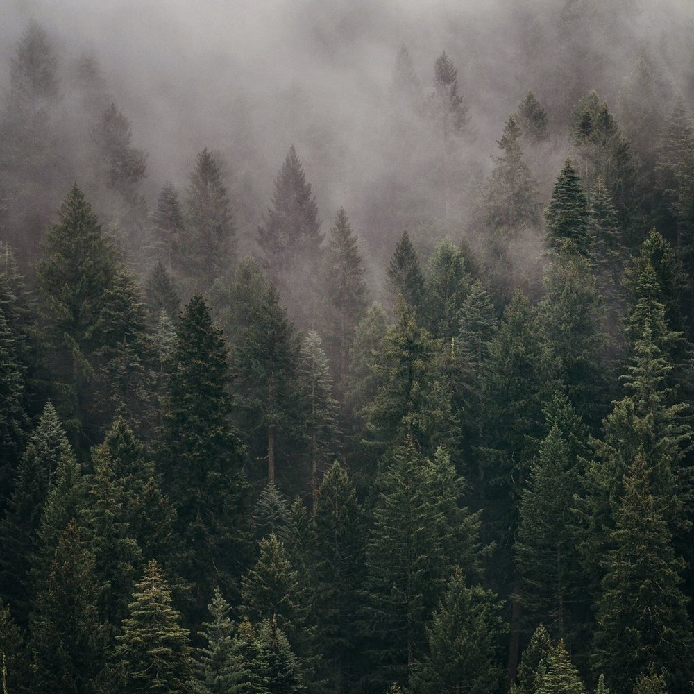 ecologyforest.jpg
