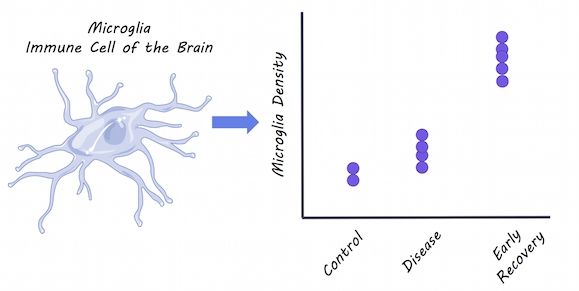 Microglia,  S  ervier Medical Art,  image by BrainPost,  CC BY-SA 3.0