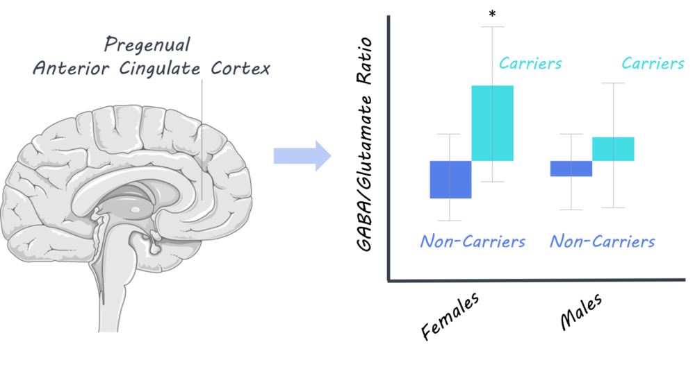 Brain,  S  ervier Medical Art,  image by BrainPost,  CC BY-SA 3.0