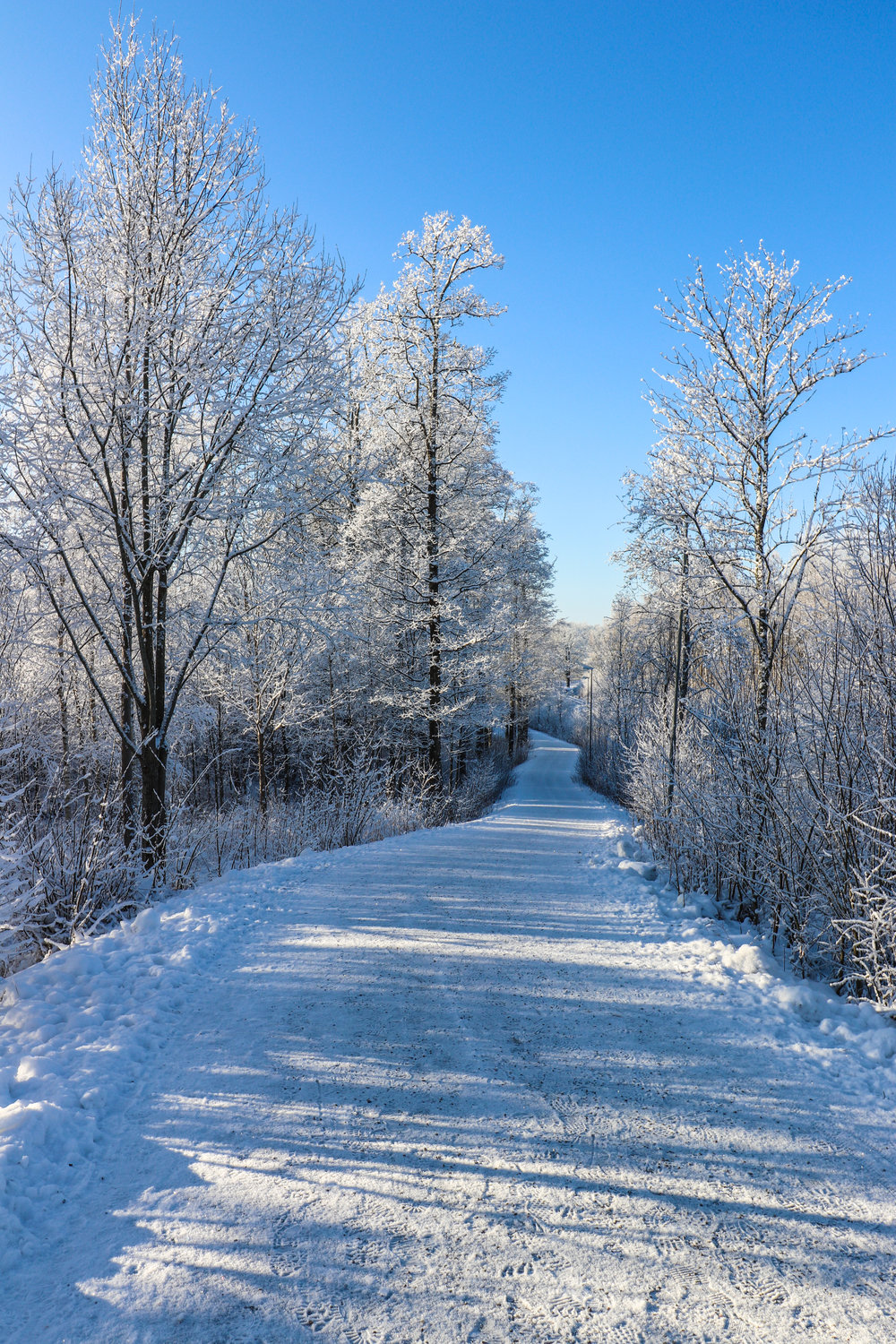 A beautiful winter day in Sweden Photo by Linda Haggh.jpg