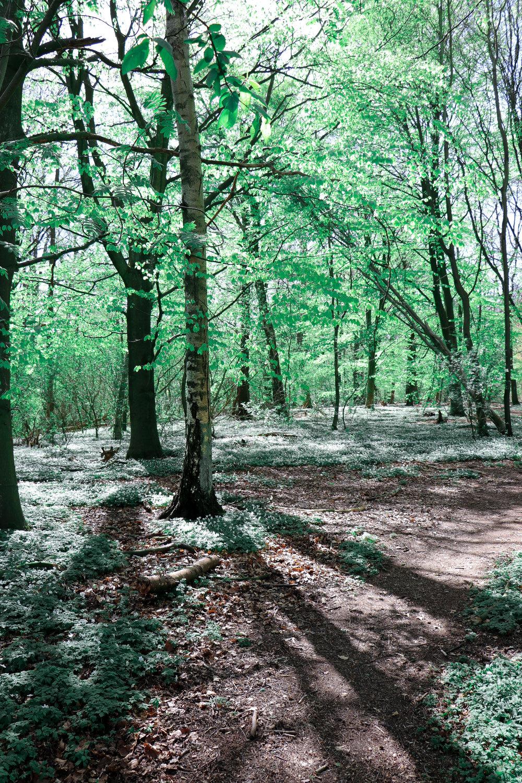 Our favorite forest  Vår favorit skog