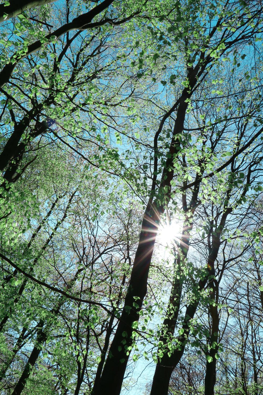 Swedish forest photo by Linda Haggh.jpg