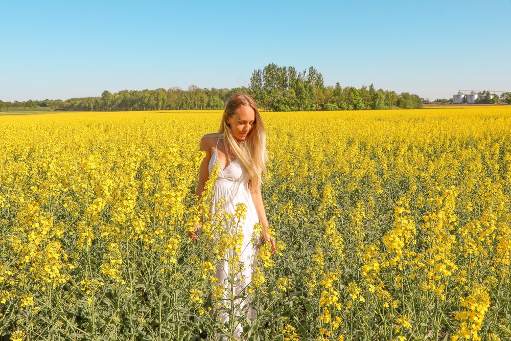 Pretty yellow fields of gold photo Linda Haggh.jpg