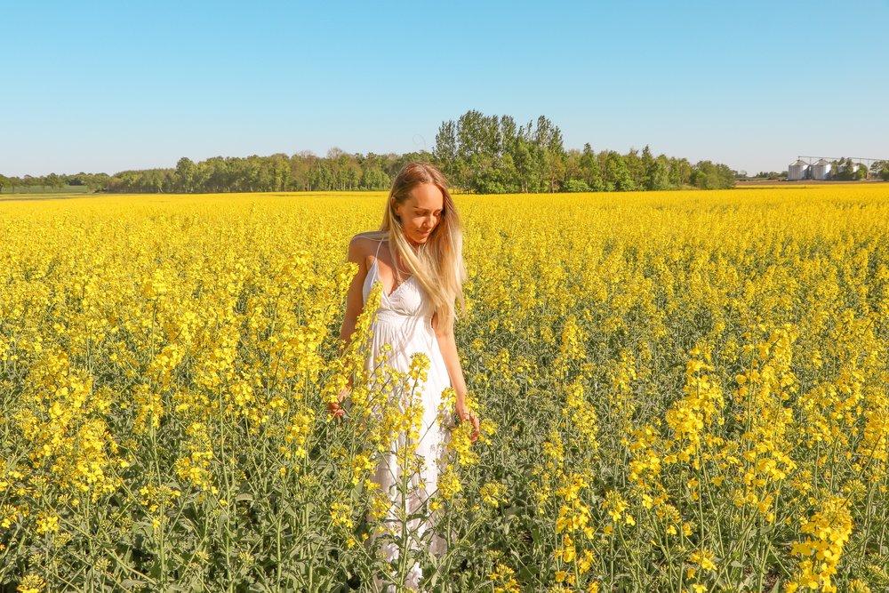 Pretty yellow fields of gold photo Linda Haggh.jpg