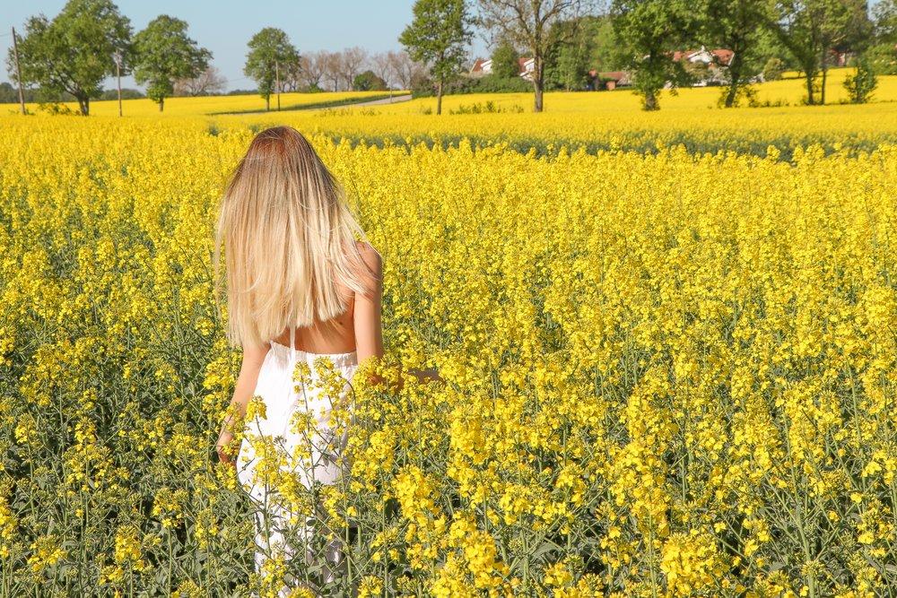 White dress and fields of gold photo Linda Haggh.jpg