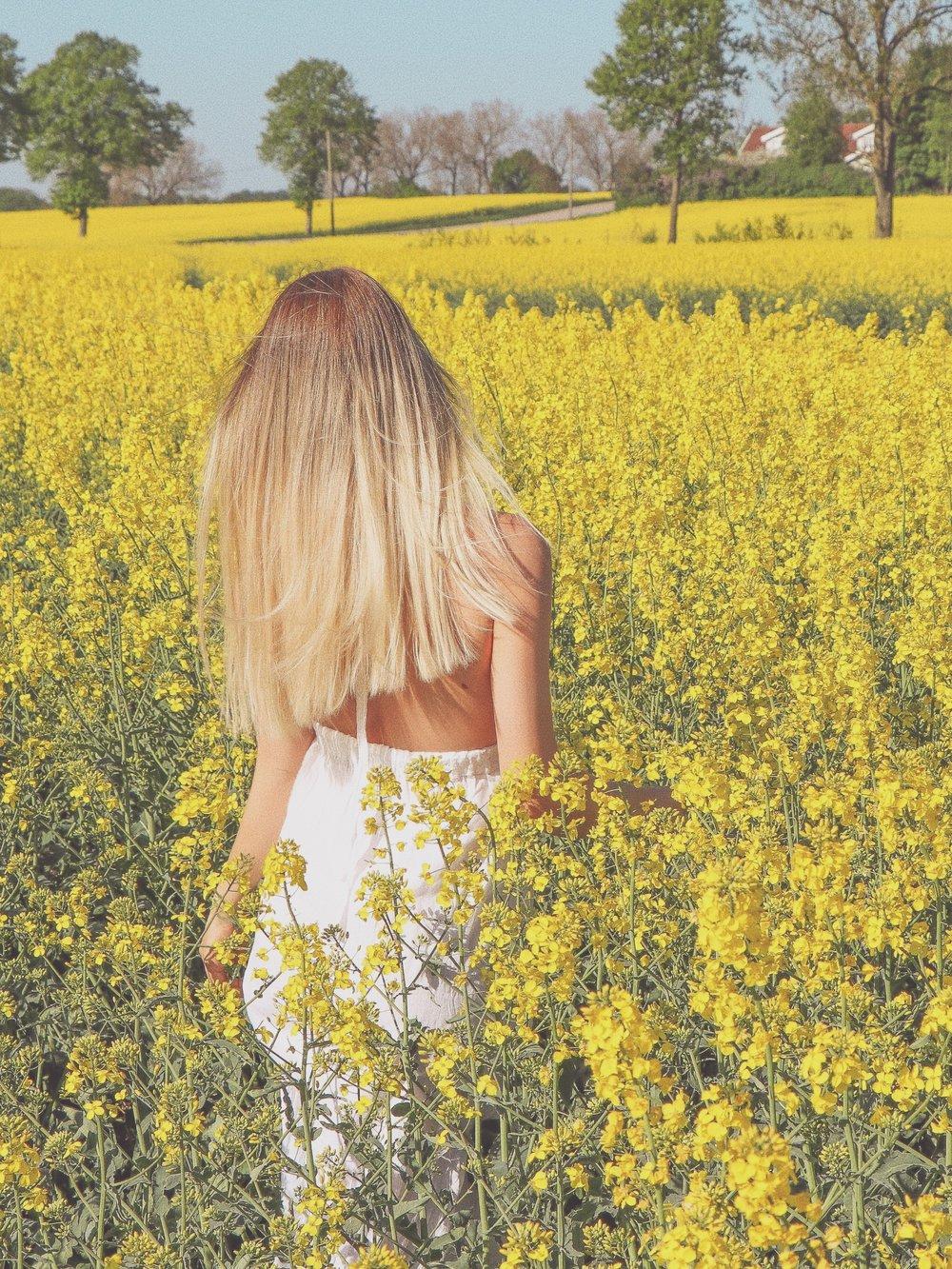 Swedish landscape and fields of gold photo Linda Haggh.jpg