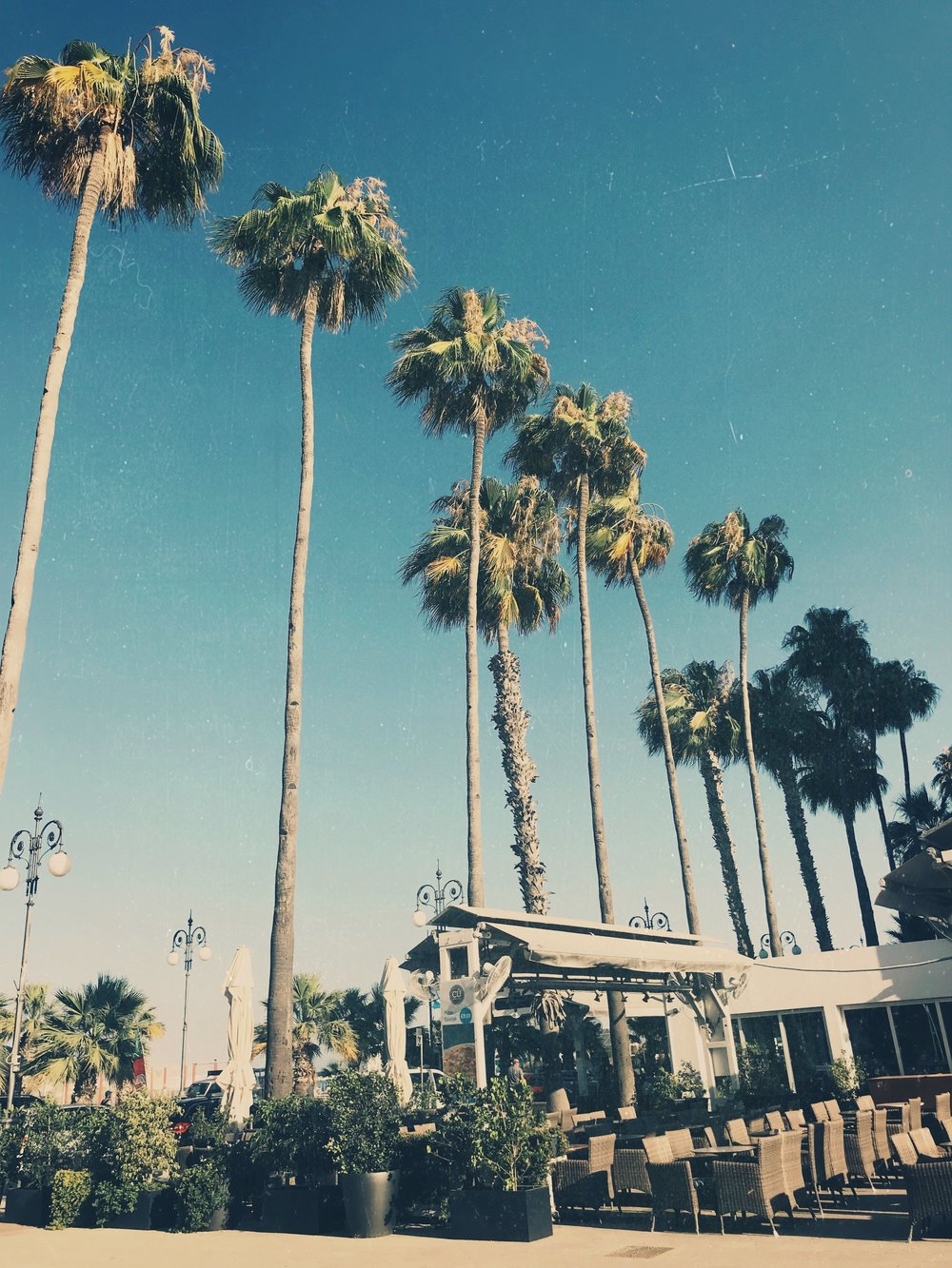 palmtrees beach walk www.lindahaggh.com.jpg