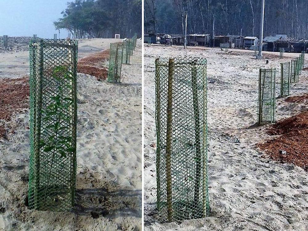 Birla-Tyres-CSR-Activities-Tree-Planting-3.jpg