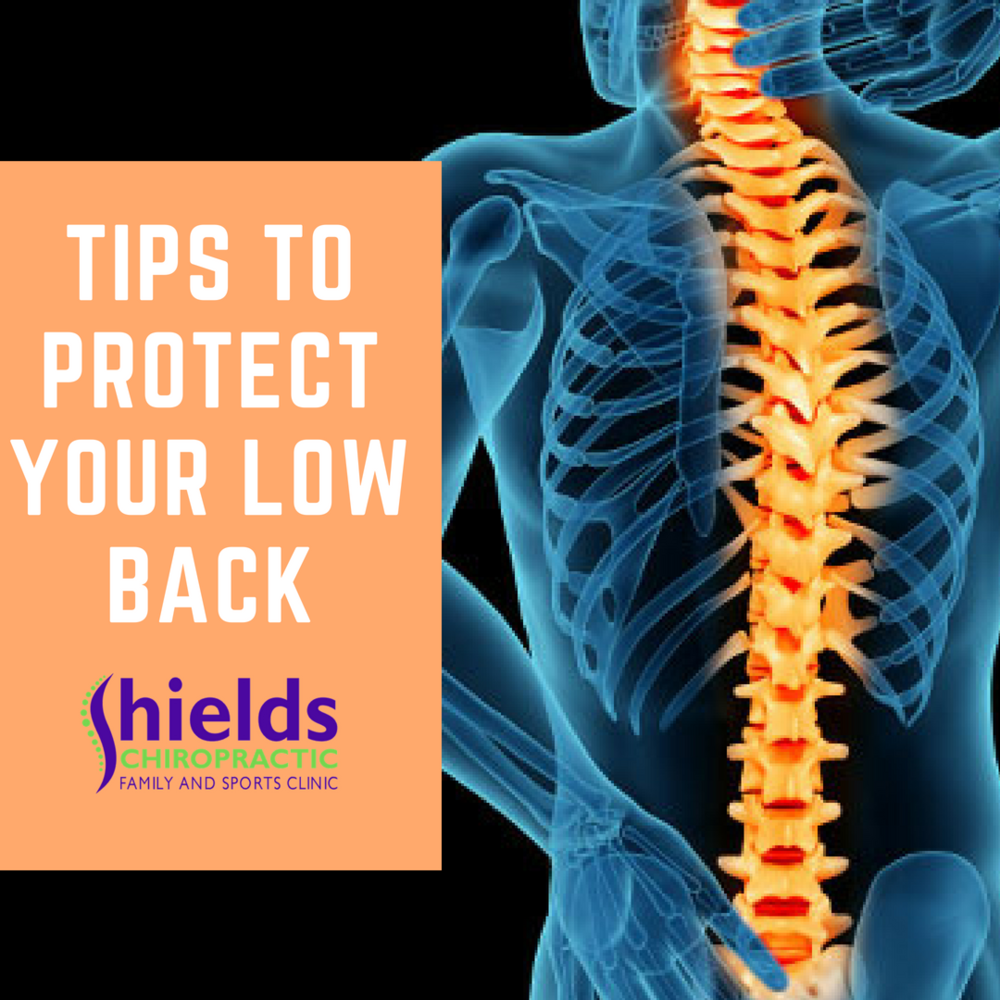 shields-chiropractic-low-back.png