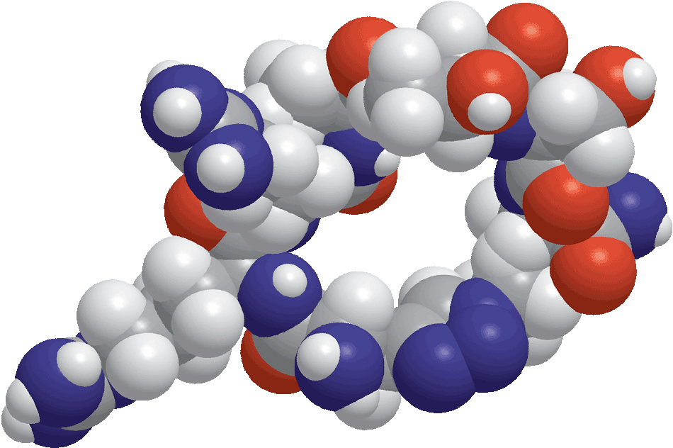 Peptide-.png