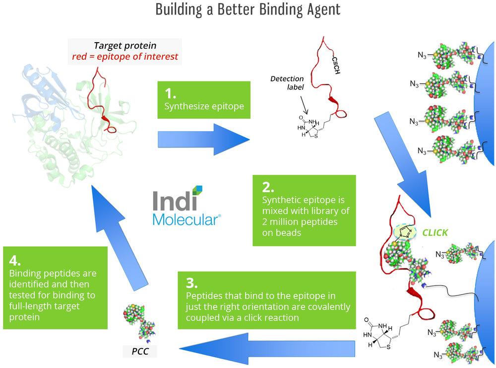 Building a Better Binding Agent.jpg