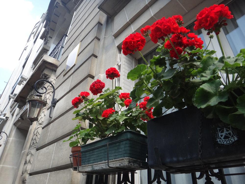 photo credit: Carolyn Marquardt /  Paris flowers