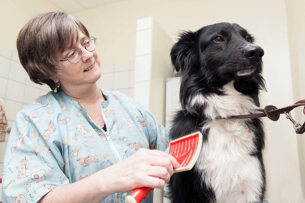 Carnegiebrushingdog-IMG_2868.jpg