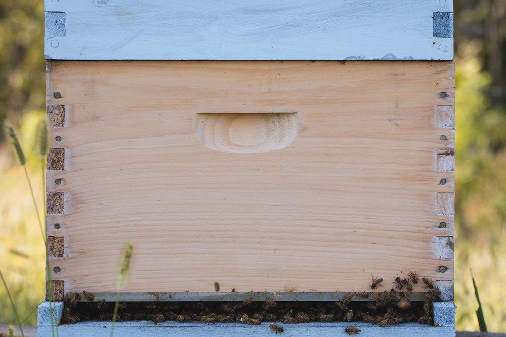 Bees Close.jpg