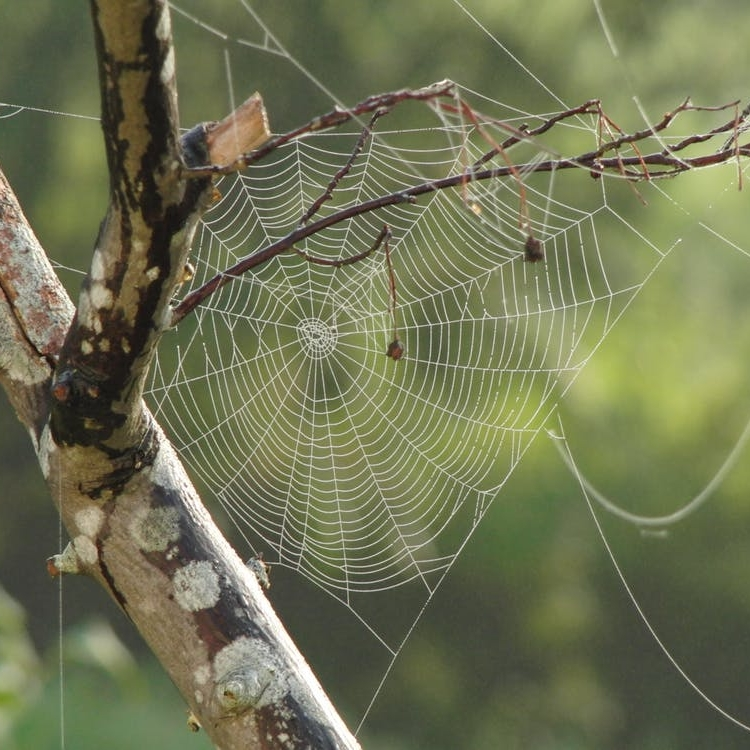 spider-web-tree-branches-pattern-39494.jpeg