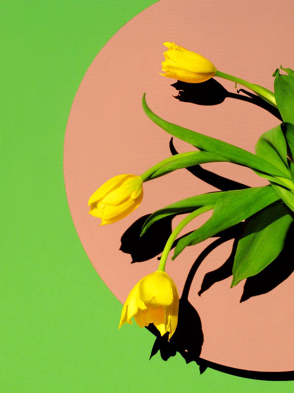 12x16_pink_green_tulip.jpg