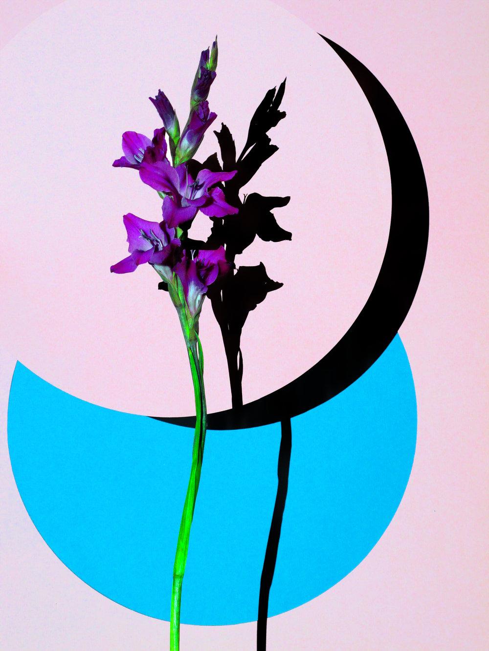 12x16_pink_blue_tall.jpg