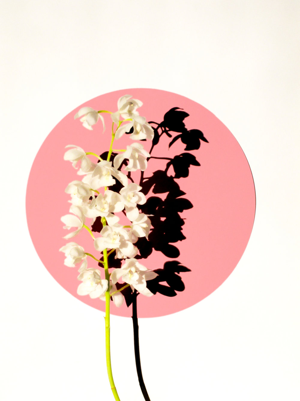 12x16_pink_orchid.jpg