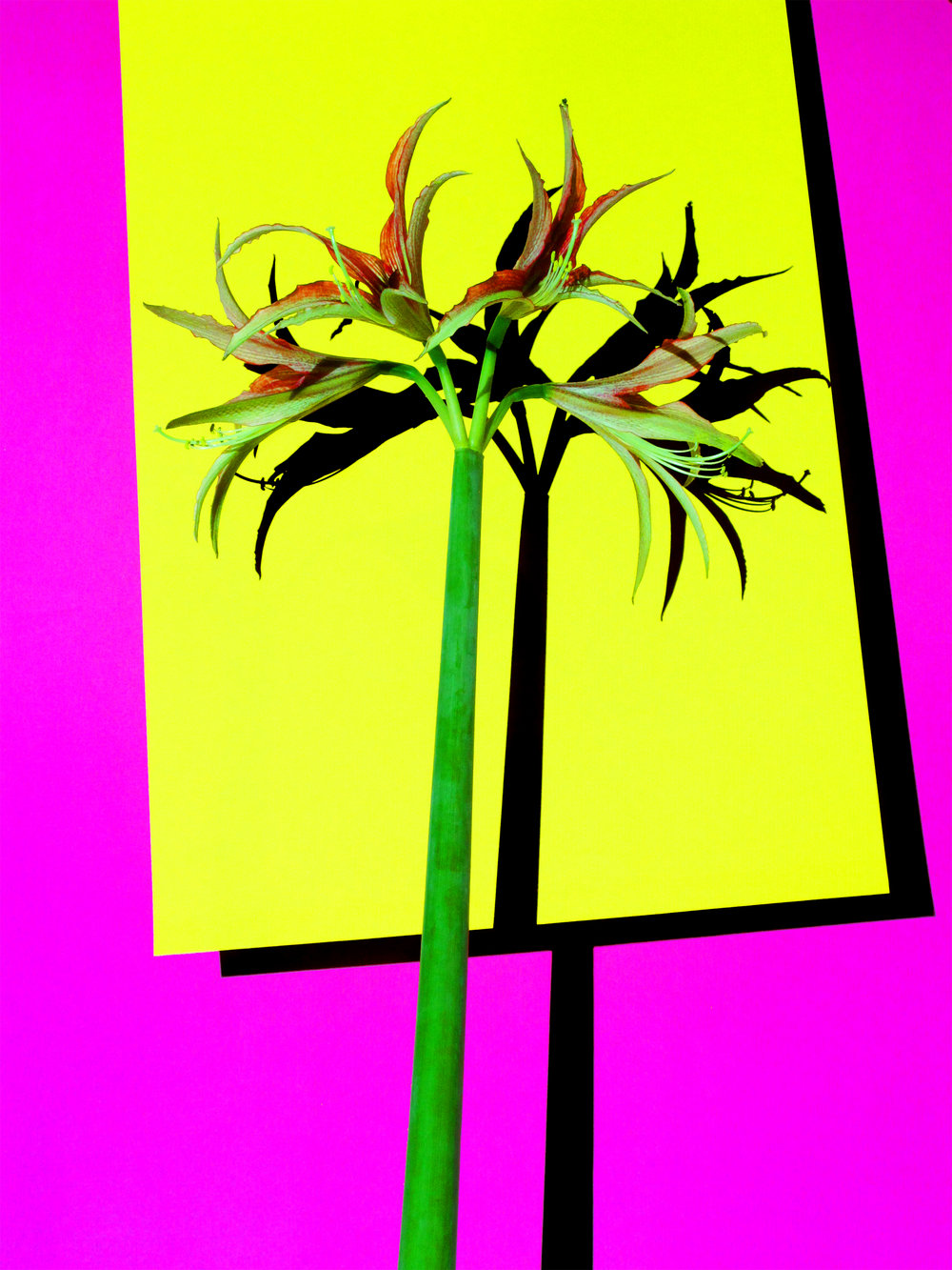 16x20_magenta_yellow_spike.jpg