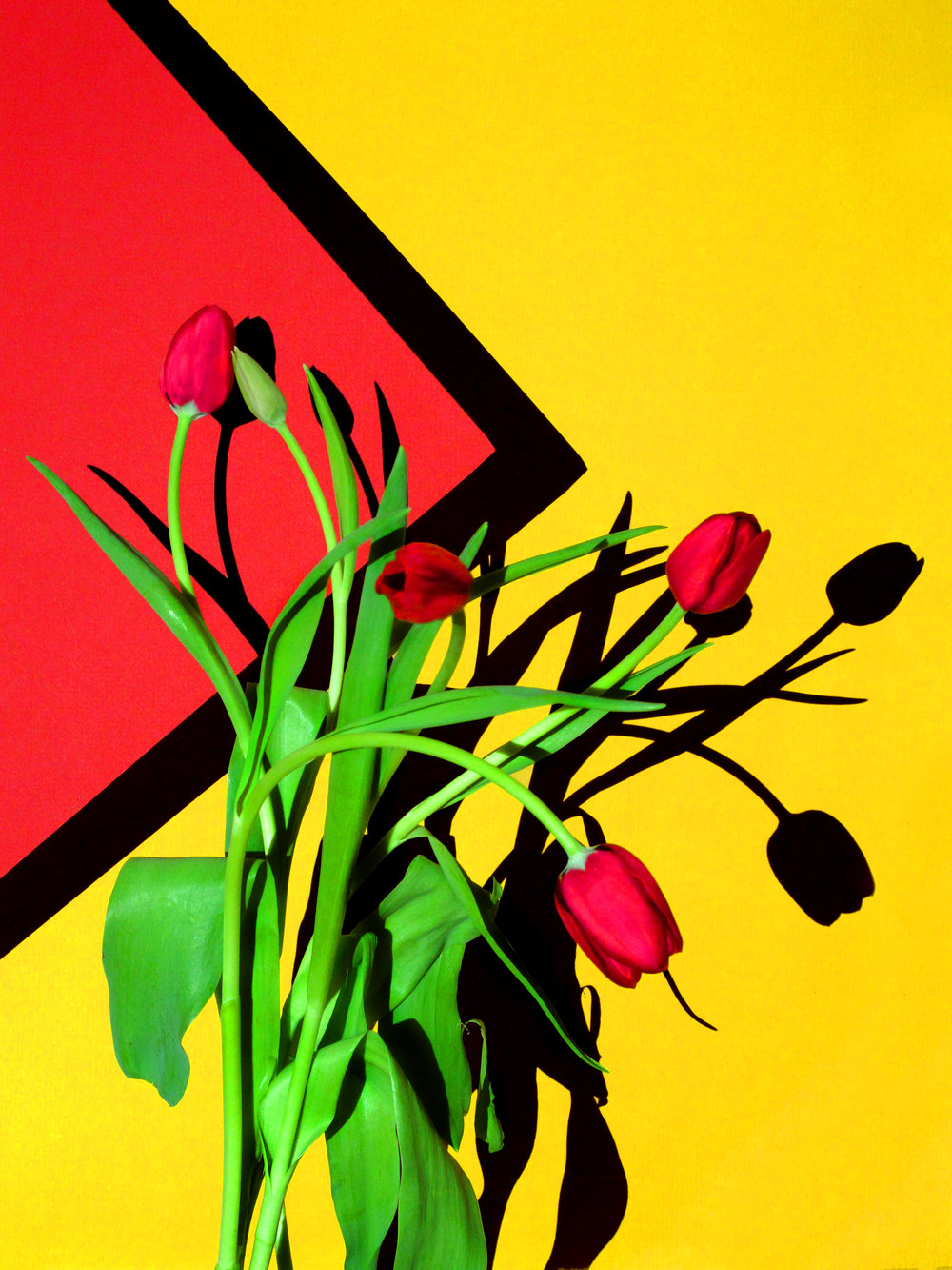 16x20_red_yellow_tulips.jpg