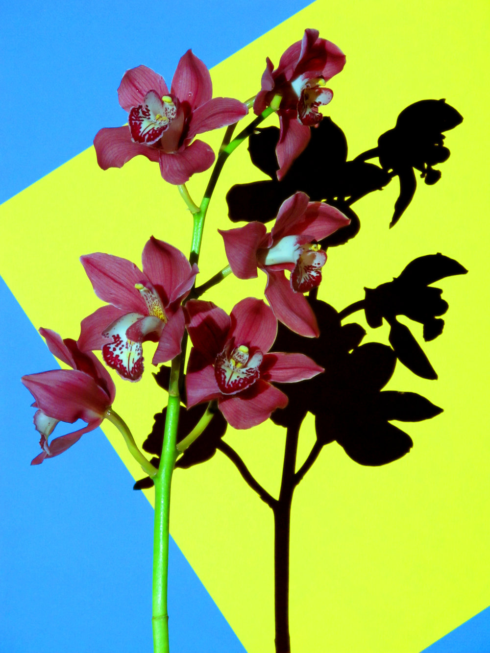 16x20_Yellow_Blue_Orchid.jpg