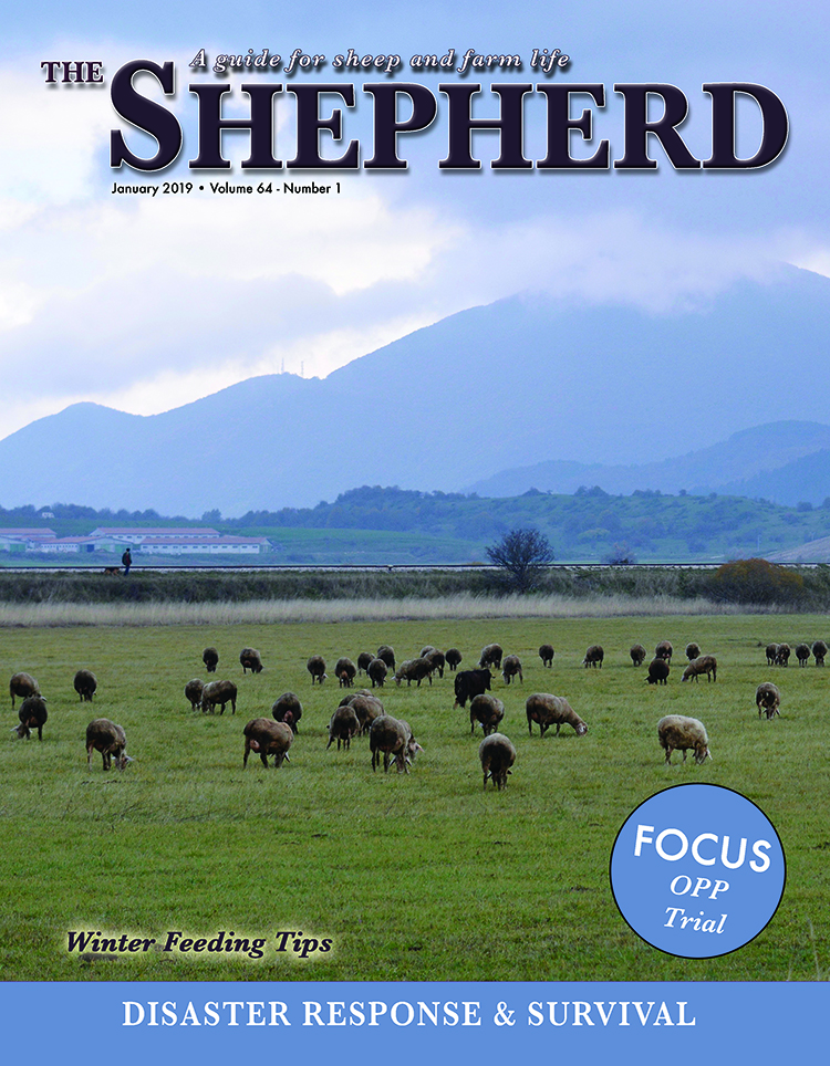 Click here to view a recent version of The Shepherd magazine.