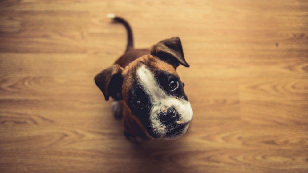 4. Bulldogs -