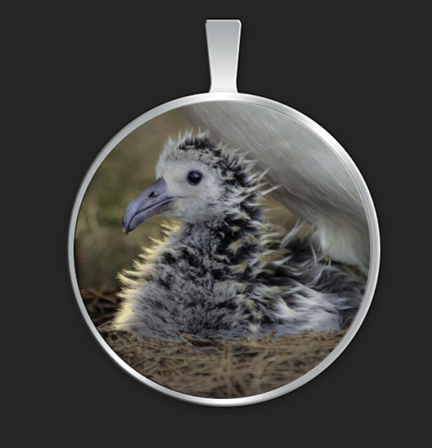 albatross-chick-egg-tooth-round-pendant.png