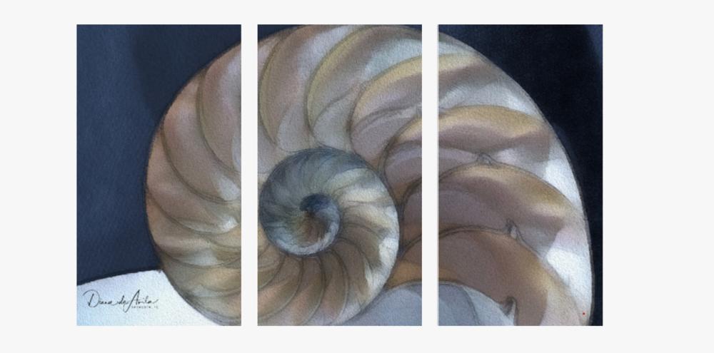 Nautilus Triptych