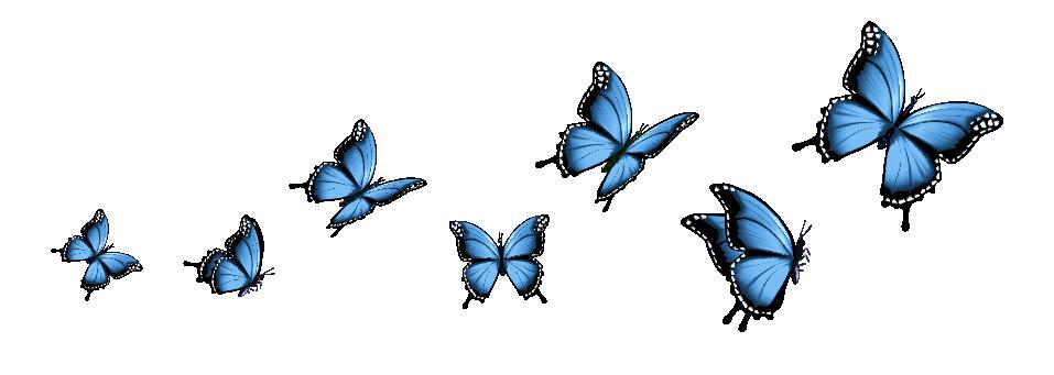 whatsnext_butterflies-02.png