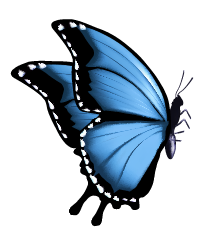 butterfly-02.png