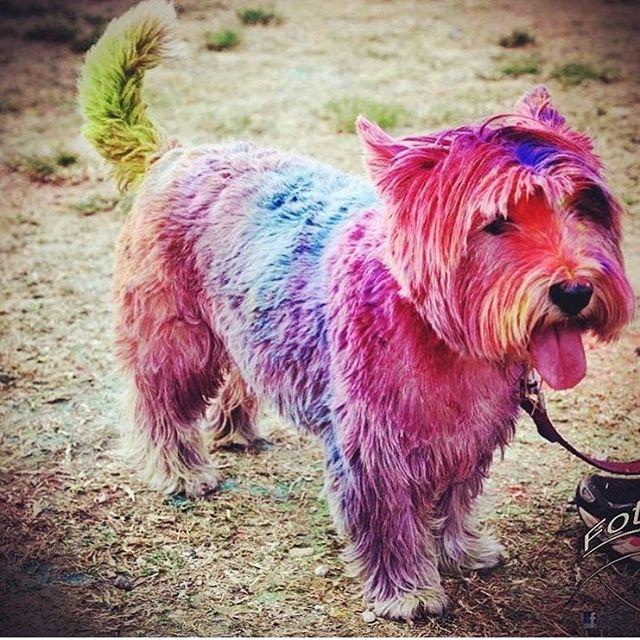The aftermath of this #rainbowrun is pure joy 🌈🐶 #dogwednesday #runtheworld