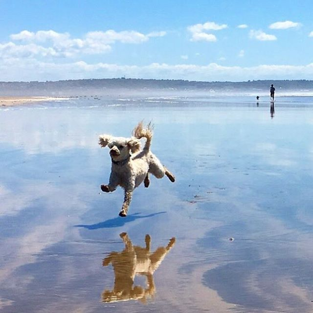 This is exactly how we feel in this amazing heatwave #dogwednesday #runtheworld