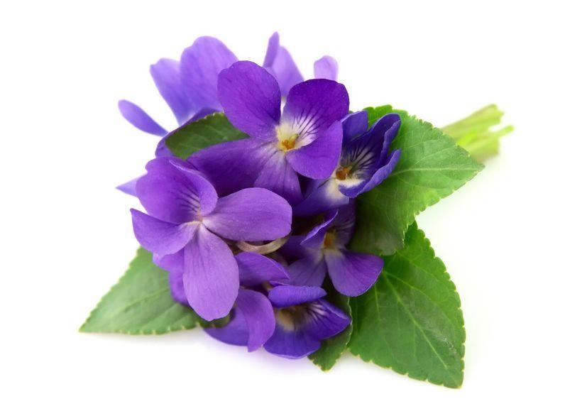 violet.jpg
