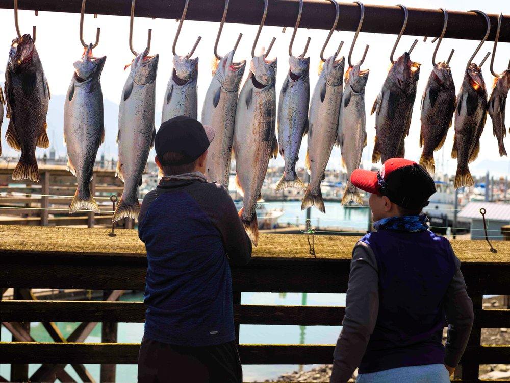 half day - salmon/rockfish$225/person