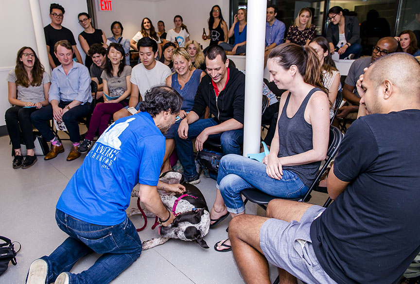 Foster education  Foster Dogs has developed a stellar education program that we offer for no charge to our foster community! Offered in convenient Manhattan locations, our workshops are designed for anyone interested in fostering or improving their lifesaving expertise.  See upcoming events .