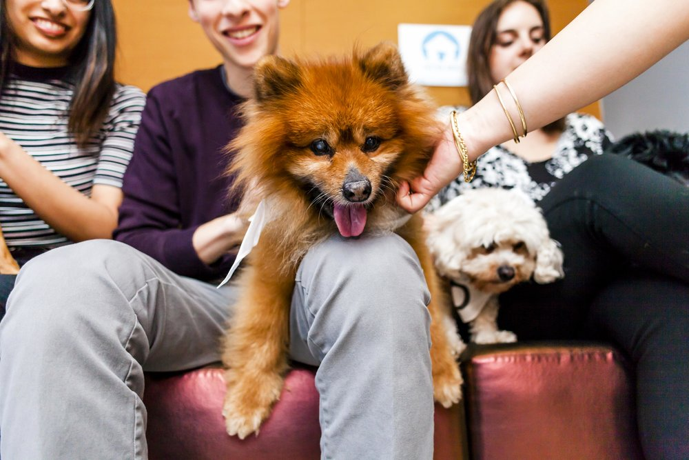 FosterDogs_DiscoveryPuppyParty_20180326_4910_©StaceyAxelrod.jpg