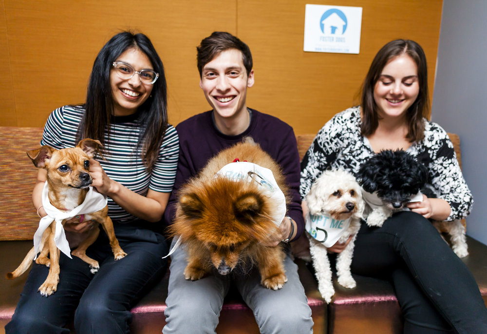 FosterDogs_DiscoveryPuppyParty_20180326_4902_©StaceyAxelrod.jpg