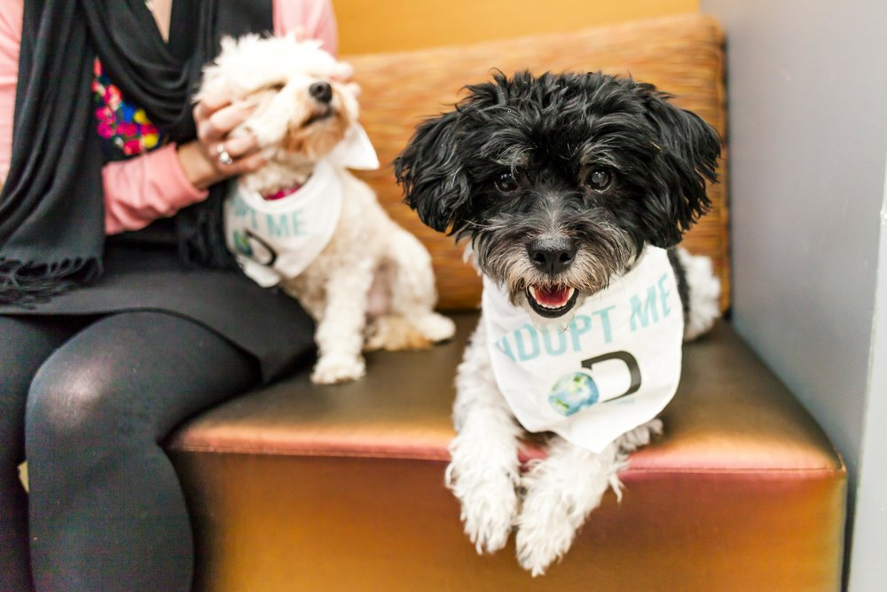 FosterDogs_DiscoveryPuppyParty_20180326_4962_©StaceyAxelrod.jpg