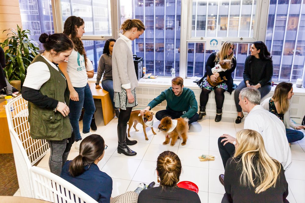FosterDogs_DiscoveryPuppyParty_20180326_4990_©StaceyAxelrod.jpg