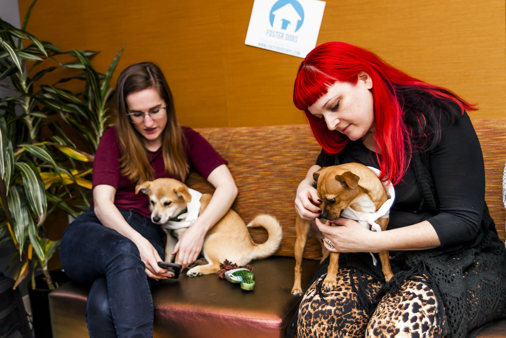 FosterDogs_DiscoveryPuppyParty_20180326_5042_©StaceyAxelrod.jpg