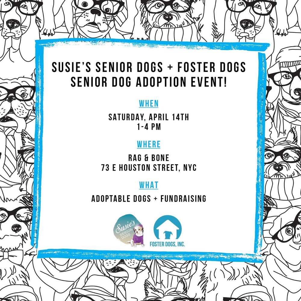 Senior Dog Adoption Event Flyer