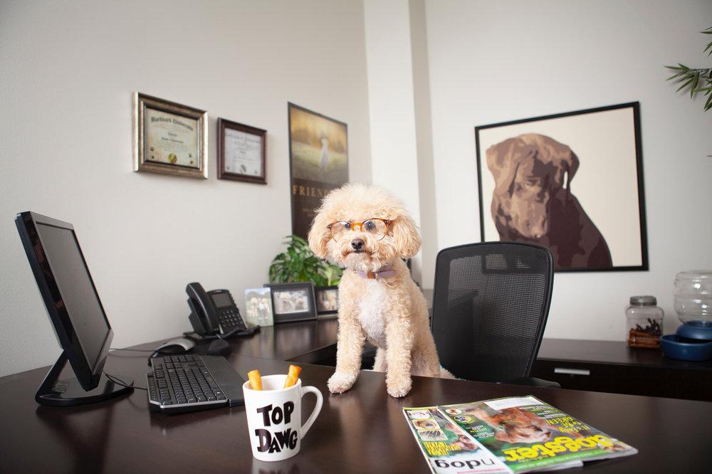 Petmate CFO - Charlie.jpeg