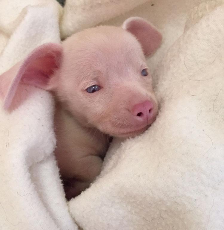 pinkpigletpuppy.jpg