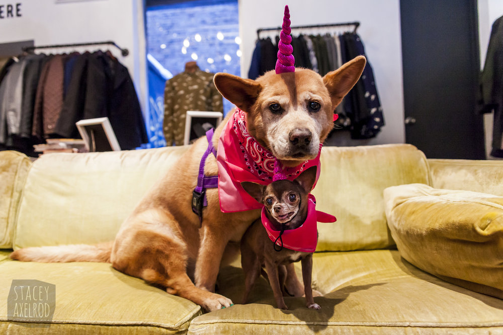 FosterDogs_Valentines-Adoption-Event_Vaute_2017Feb11_0061.jpg