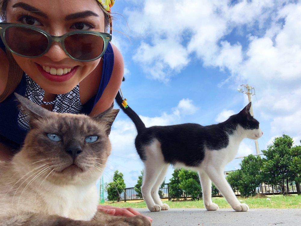 Okinawa cats