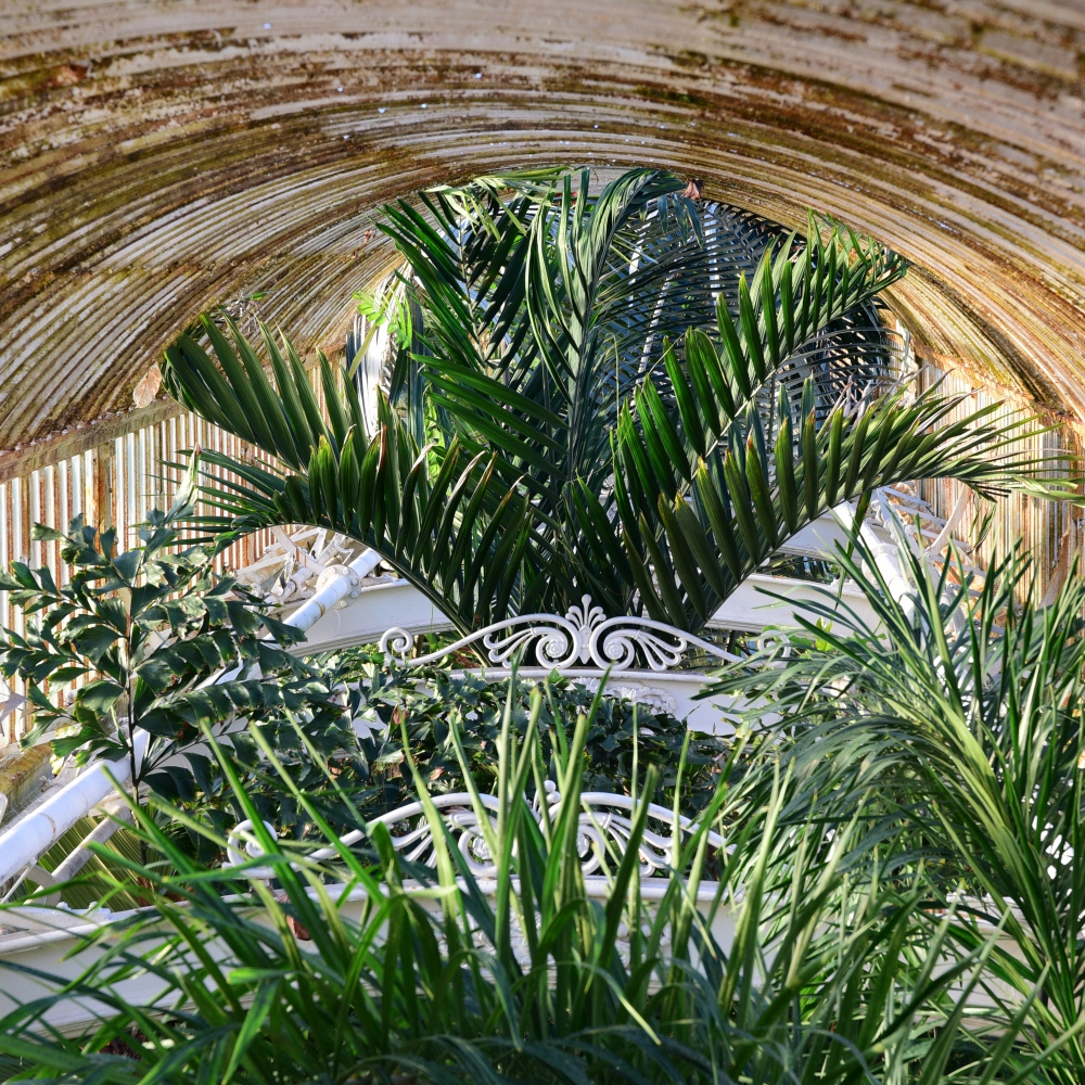 The Palm House 9 Arthur Road Landscapes.jpg