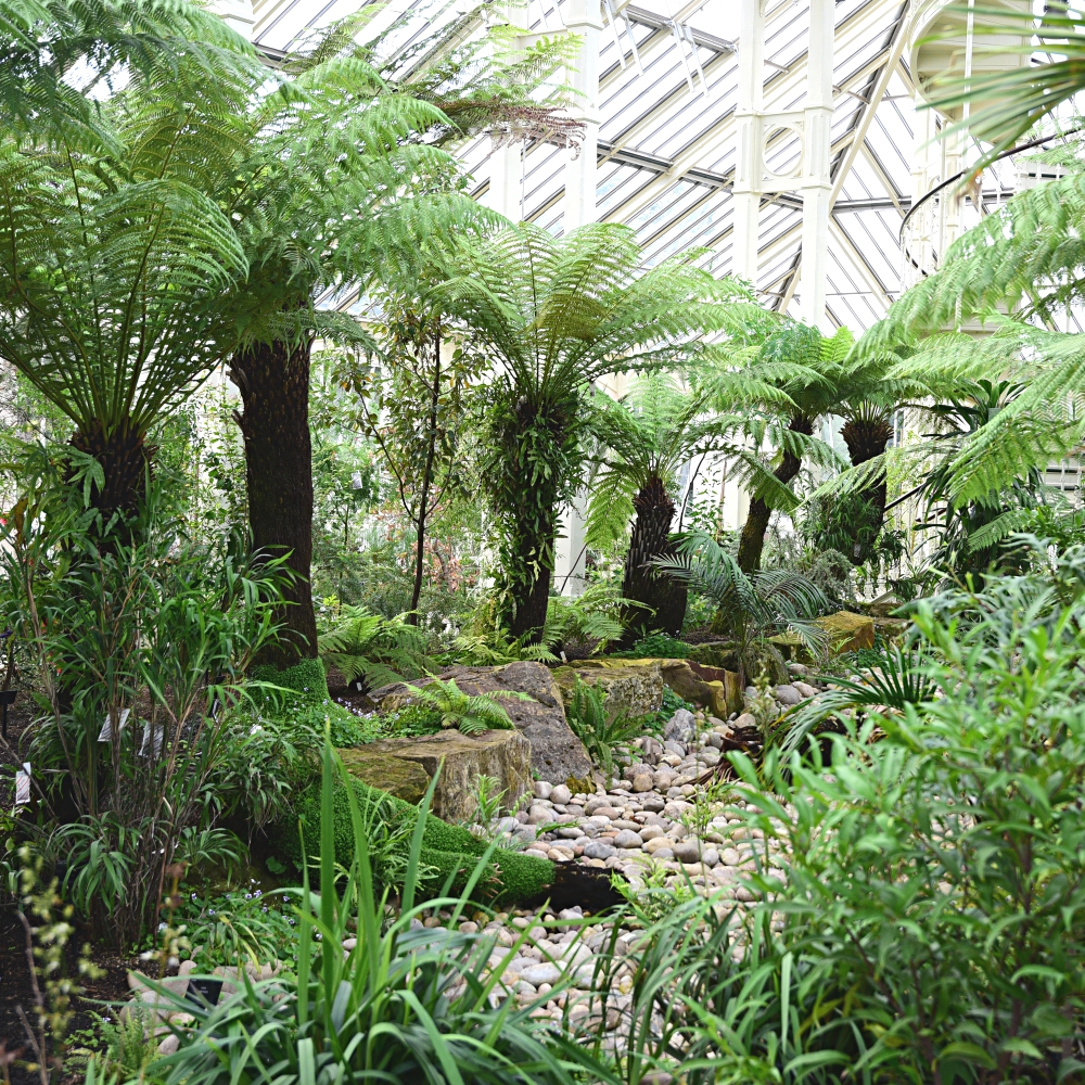 The Temperate House Kew  12 Arthur Road Landscapes.jpg